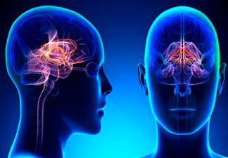 funcionamento cerebral