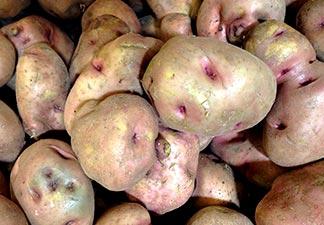 o que é batata doce