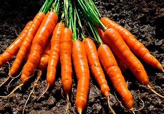 o que é cenoura?