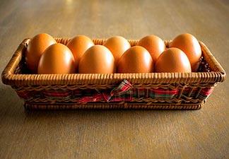 alimentação ovos