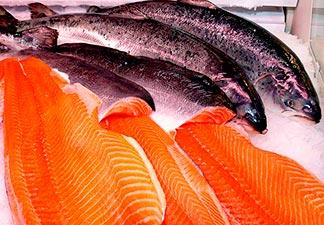 peixes de porte grande