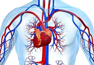 cardiovascular mais saudável