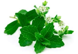 o que é stevia?