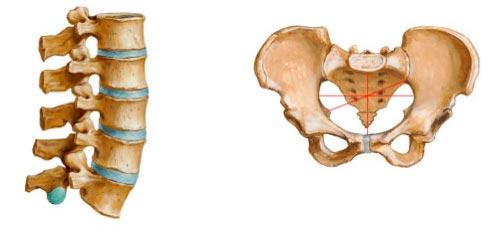 articulação-cartilaginosa