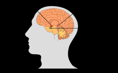 glândula pituitaria